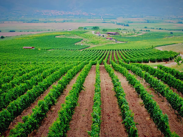 Bulgarian 5 day Wine tour