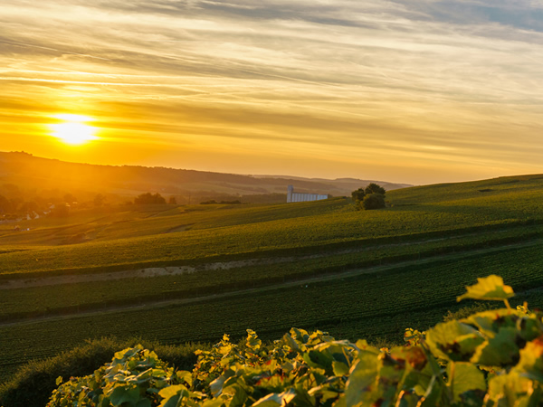 Wine weekend in Champagne 1st to 3rd November 2019