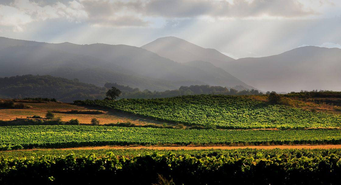 Good Wine Tours Rioja Wine Tour