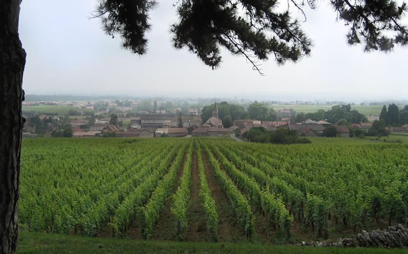 Burgundy wine break Spring 2020