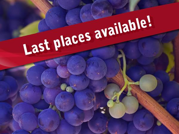 Burgundy tour last places available